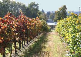 Profit Maximizing Control Strategies in the Grape and Wine Industry